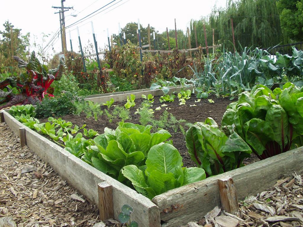 a-vegetable-garden1.jpg