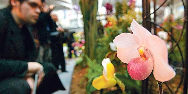 divlja-orhideja.jpg