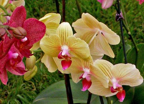 orhideje.jpg