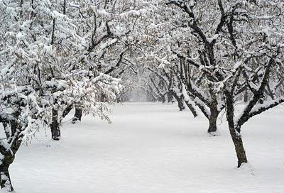 zima-vocke.jpg