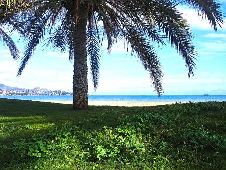 Mediteranske biljke sve češće i na kontinentu